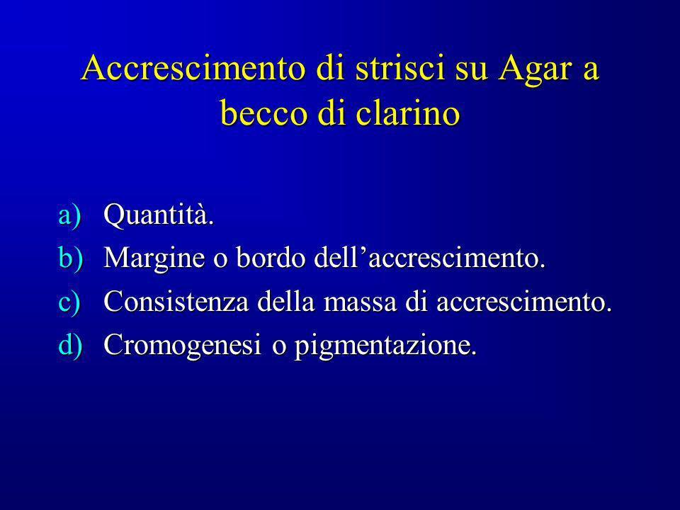 Accrescimento di strisci su Agar a becco di clarino a)Quantità. b)Margine o bordo dellaccrescimento. c)Consistenza della massa di accrescimento. d)Cro