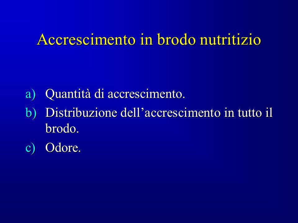 Accrescimento in brodo nutritizio a)Quantità di accrescimento. b)Distribuzione dellaccrescimento in tutto il brodo. c)Odore.