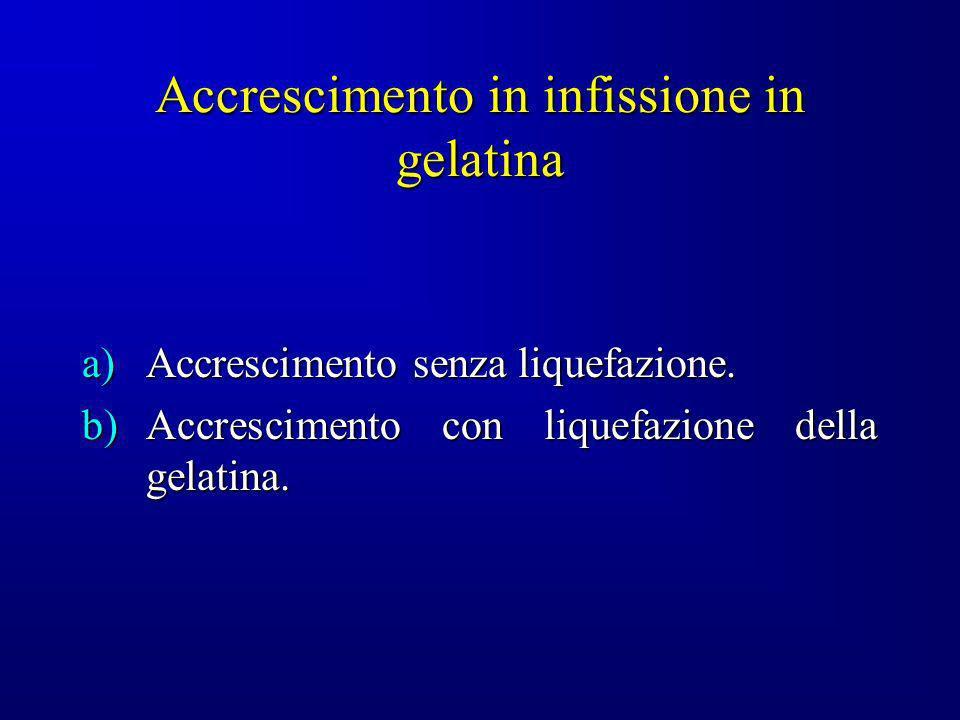 Accrescimento in infissione in gelatina a)Accrescimento senza liquefazione. b)Accrescimento con liquefazione della gelatina.