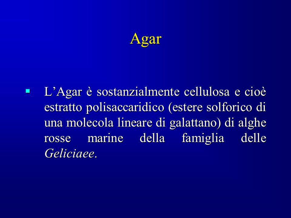 Agar LAgar è sostanzialmente cellulosa e cioè estratto polisaccaridico (estere solforico di una molecola lineare di galattano) di alghe rosse marine d