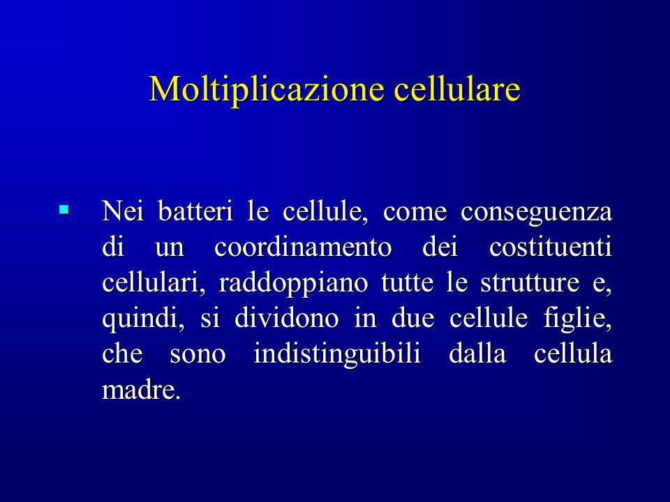 Moltiplicazione cellulare Nei batteri le cellule, come conseguenza di un coordinamento dei costituenti cellulari, raddoppiano tutte le strutture e, qu