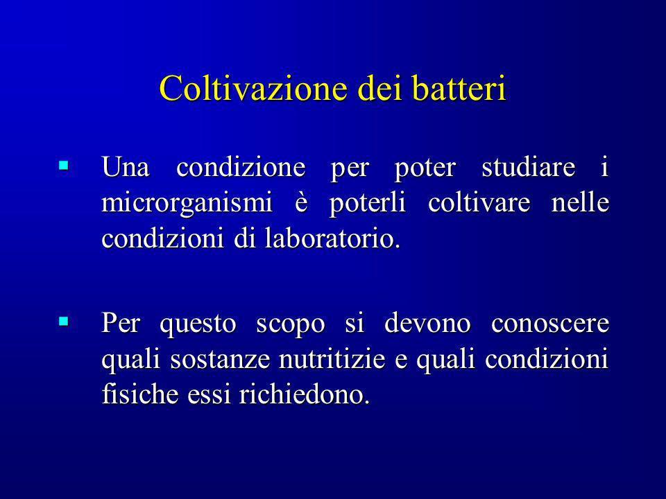 Coltivazione dei batteri Una condizione per poter studiare i microrganismi è poterli coltivare nelle condizioni di laboratorio. Una condizione per pot