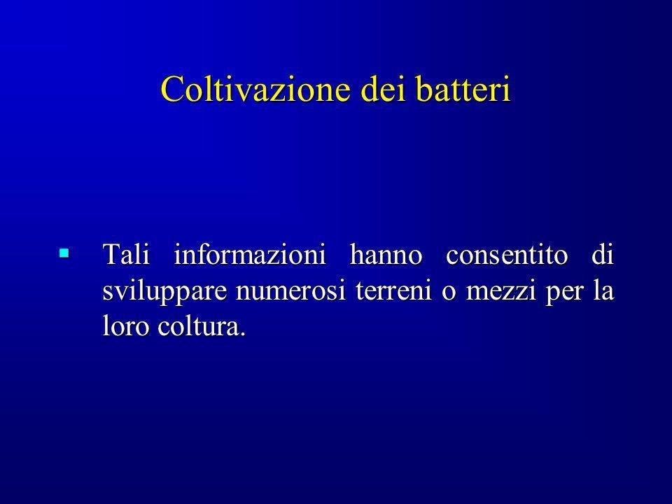 Coltivazione dei batteri Tali informazioni hanno consentito di sviluppare numerosi terreni o mezzi per la loro coltura. Tali informazioni hanno consen
