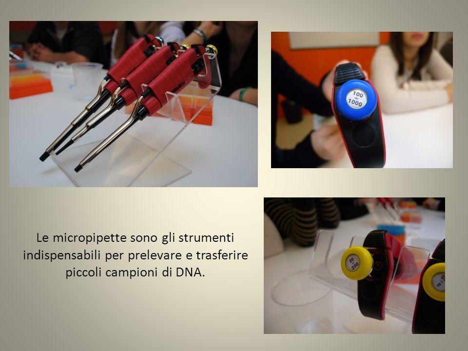 Viene impartita una breve spiegazione teorica in merito allelettroforesi su gel dagarosio ed alle fasi dellesercitazione da svolgere.