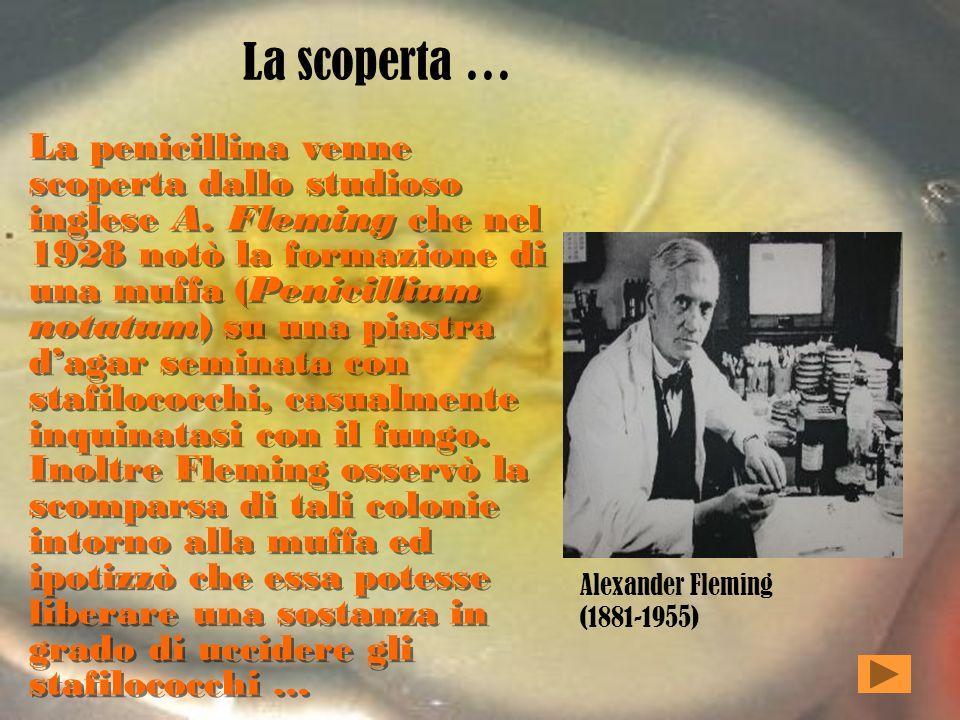 La scoperta … La penicillina venne scoperta dallo studioso inglese A.