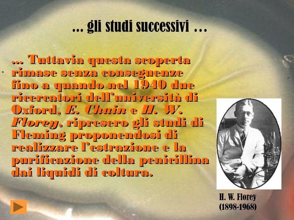 La scoperta … La penicillina venne scoperta dallo studioso inglese A. Fleming che nel 1928 notò la formazione di una muffa (Penicillium notatum) su un