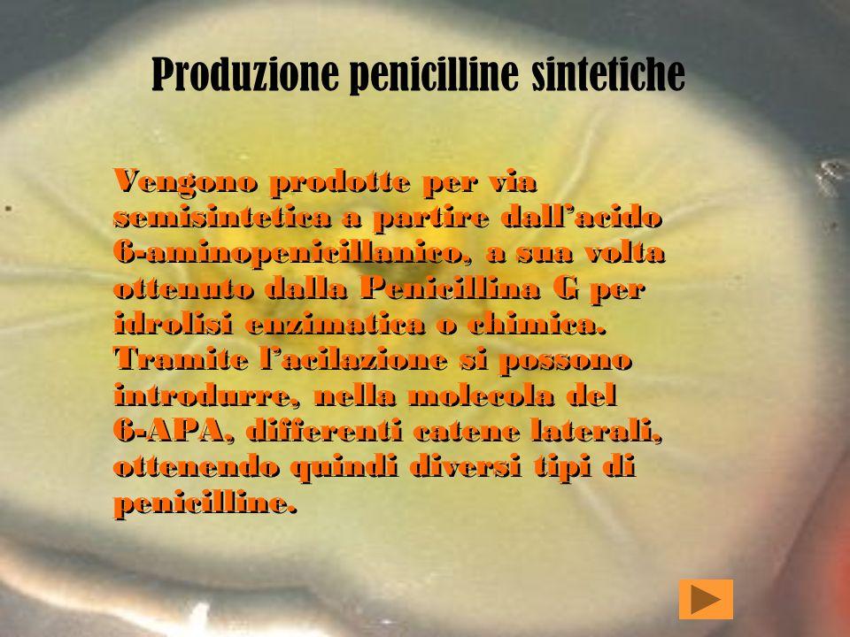 Produzione penicilline sintetiche Vengono prodotte per via semisintetica a partire dallacido 6-aminopenicillanico, a sua volta ottenuto dalla Penicillina G per idrolisi enzimatica o chimica.