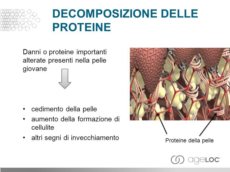 Danni o proteine importanti alterate presenti nella pelle giovane cedimento della pelle aumento della formazione di cellulite altri segni di invecchiamento Proteine della pelle DECOMPOSIZIONE DELLE PROTEINE