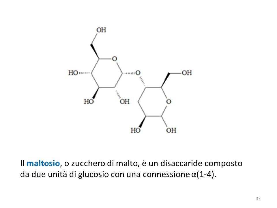 Il maltosio, o zucchero di malto, è un disaccaride composto da due unità di glucosio con una connessione α(1-4). 37