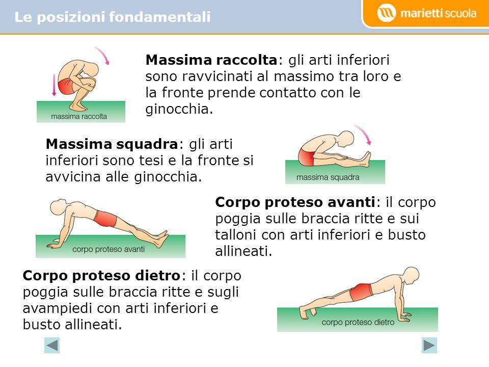 Le posizioni fondamentali Massima raccolta: gli arti inferiori sono ravvicinati al massimo tra loro e la fronte prende contatto con le ginocchia.