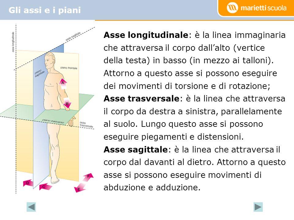 Gli assi e i piani Asse longitudinale: è la linea immaginaria che attraversa il corpo dallalto (vertice della testa) in basso (in mezzo ai talloni).