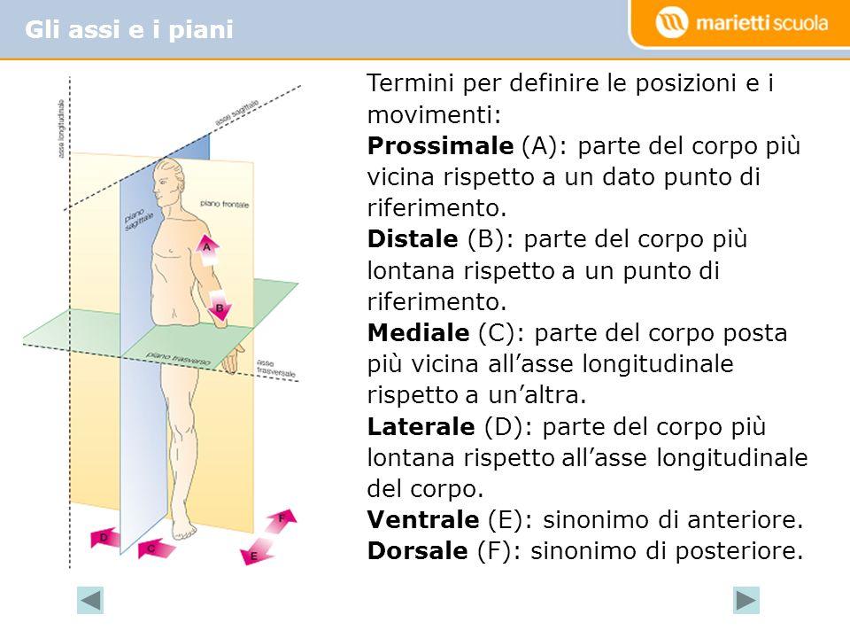 Gli assi e i piani Termini per definire le posizioni e i movimenti: Prossimale (A): parte del corpo più vicina rispetto a un dato punto di riferimento.
