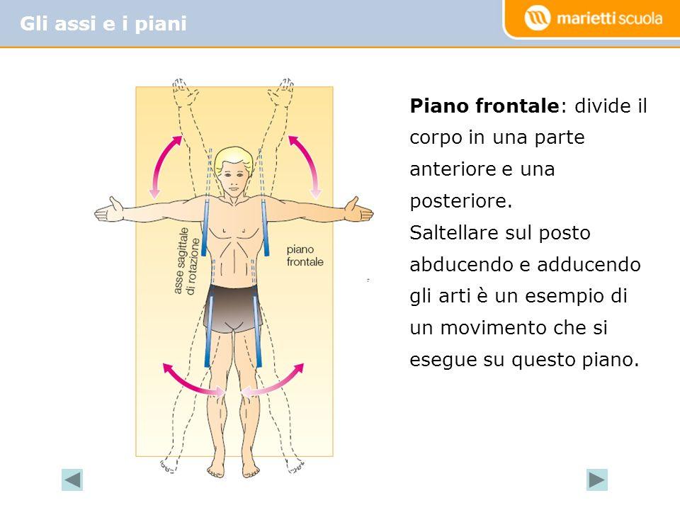 Gli assi e i piani Piano frontale: divide il corpo in una parte anteriore e una posteriore.