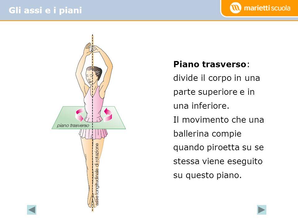 Gli assi e i piani Piano trasverso: divide il corpo in una parte superiore e in una inferiore.