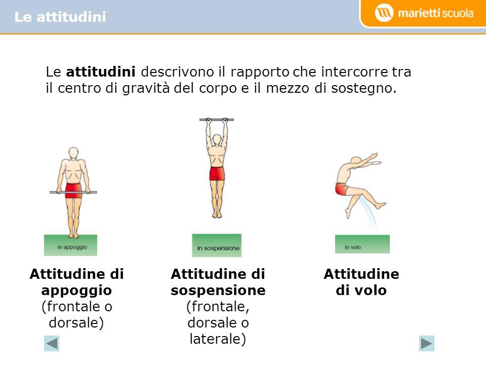 Le attitudini Attitudine di appoggio (frontale o dorsale) Attitudine di sospensione (frontale, dorsale o laterale) Attitudine di volo Le attitudini descrivono il rapporto che intercorre tra il centro di gravità del corpo e il mezzo di sostegno.