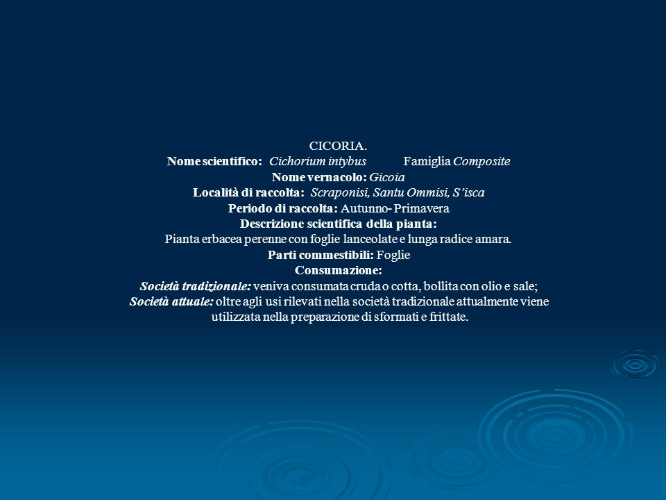 CICORIA. Nome scientifico: Cichorium intybus Famiglia Composite Nome vernacolo: Gicoia Località di raccolta: Scraponisi, Santu Ommisi, Sisca Periodo d