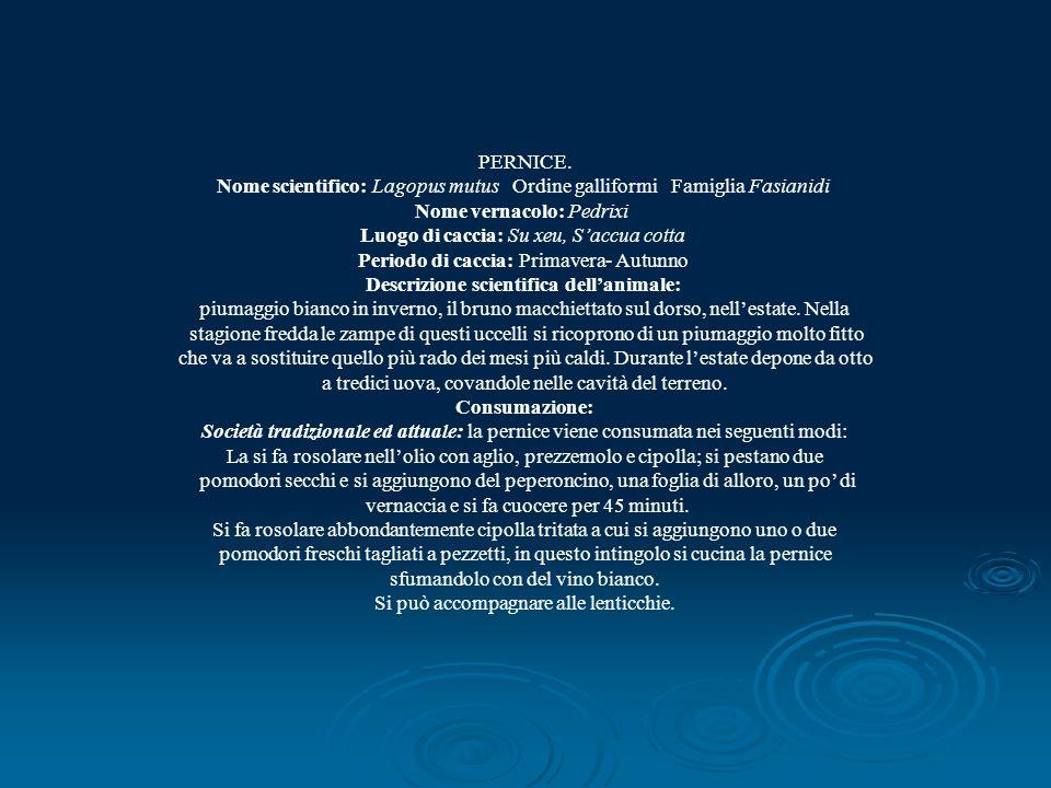 PERNICE. Nome scientifico: Lagopus mutus Ordine galliformi Famiglia Fasianidi Nome vernacolo: Pedrixi Luogo di caccia: Su xeu, Saccua cotta Periodo di