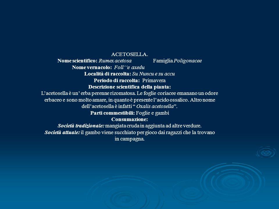 ACETOSELLA. Nome scientifico: Rumex acetosa Famiglia Poligonacee Nome vernacolo: Foll e axedu Località di raccolta: Su Nuncu e su accu Periodo di racc
