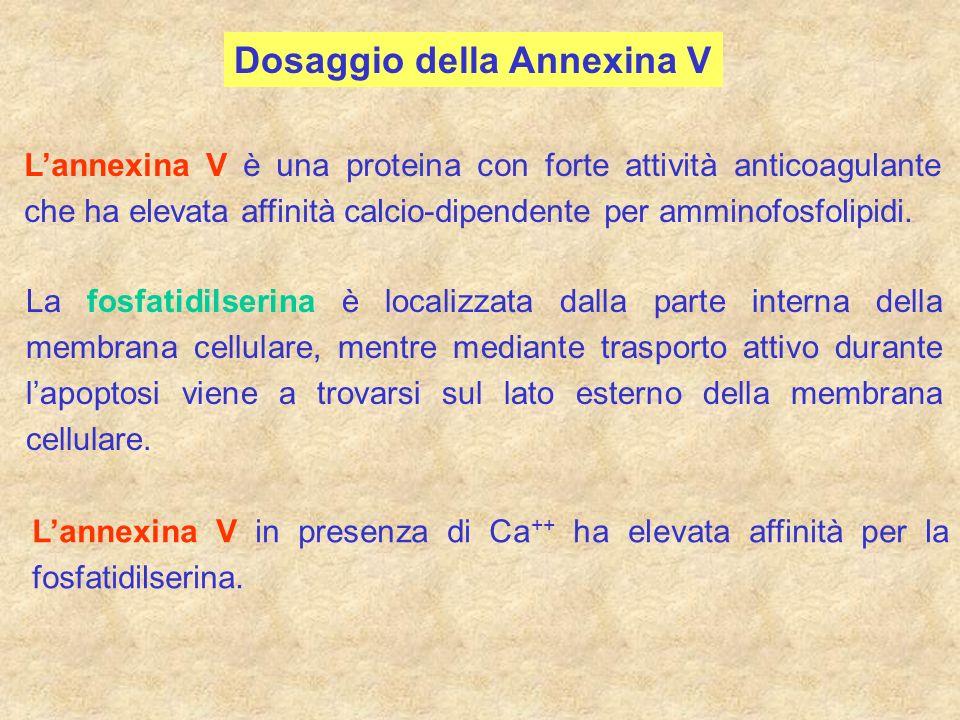 Dosaggio della Annexina V Lannexina V è una proteina con forte attività anticoagulante che ha elevata affinità calcio-dipendente per amminofosfolipidi