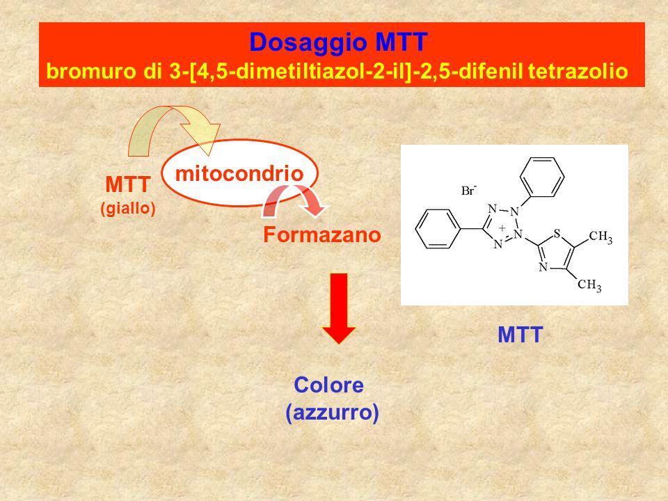 Dosaggio MTT bromuro di 3-[4,5-dimetiltiazol-2-il]-2,5-difenil tetrazolio MTT (giallo) mitocondrio Formazano Colore (azzurro) MTT