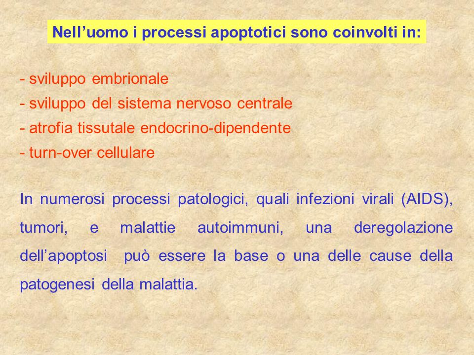 Nelluomo i processi apoptotici sono coinvolti in: - sviluppo embrionale - sviluppo del sistema nervoso centrale - atrofia tissutale endocrino-dipenden