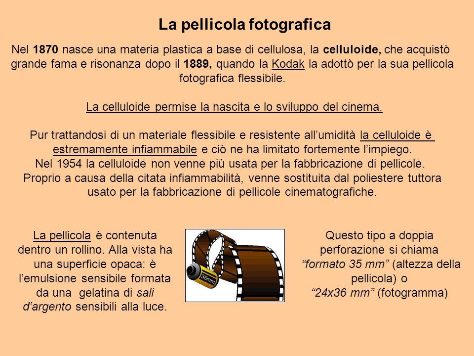 La pellicola fotografica Questo tipo a doppia perforazione si chiama formato 35 mm (altezza della pellicola) o 24x36 mm (fotogramma) La pellicola è contenuta dentro un rollino.