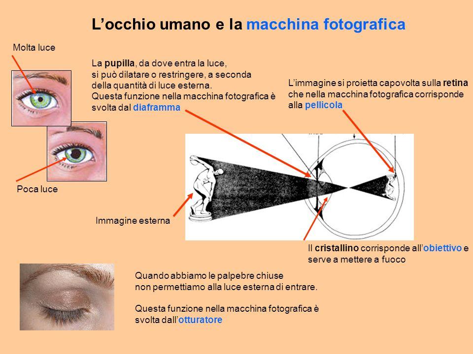 Immagine esterna Limmagine si proietta capovolta sulla retina che nella macchina fotografica corrisponde alla pellicola La pupilla, da dove entra la luce, si può dilatare o restringere, a seconda della quantità di luce esterna.