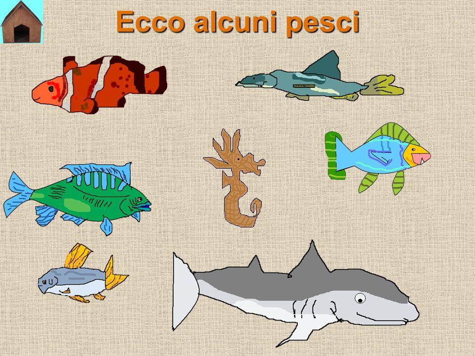 I PESCI I pesci vivono nellacqua.Hanno il corpo ricoperto di squame.