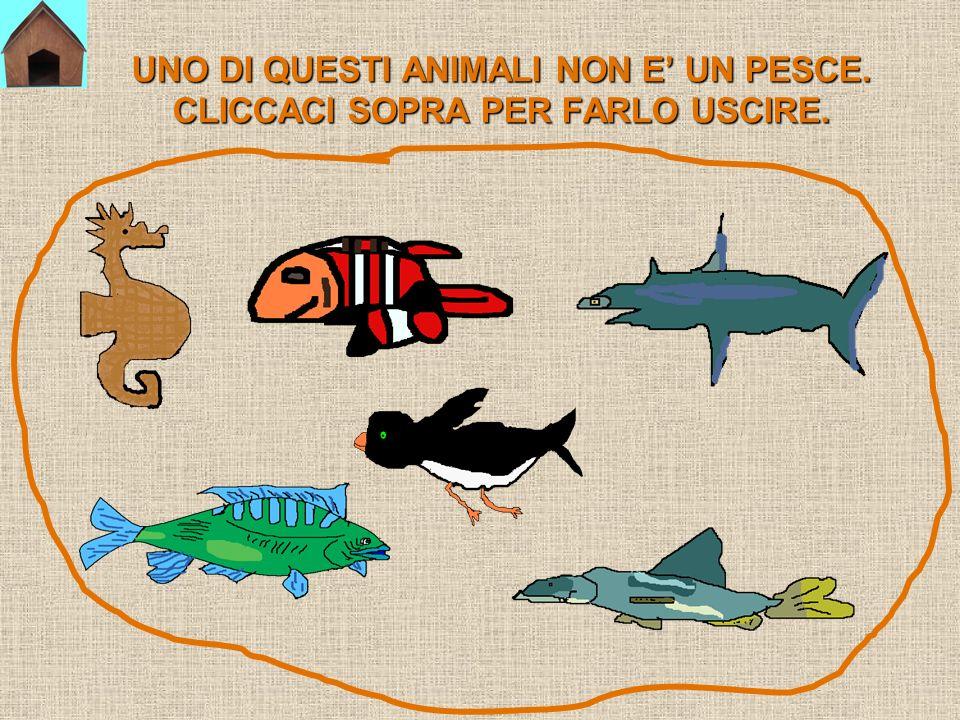 Ora mettiti alla prova per vedere se sai riconoscere i pesci!