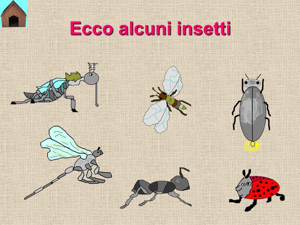 GLI INSETTI Gli insetti sono piccoli e leggeri.Hanno sei zampe e il corpo diviso in tre parti.
