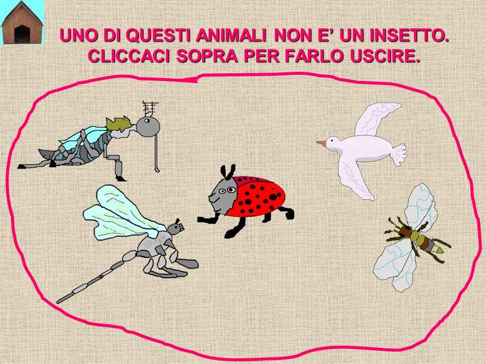 Ora mettiti alla prova per vedere se sai riconoscere gli insetti!