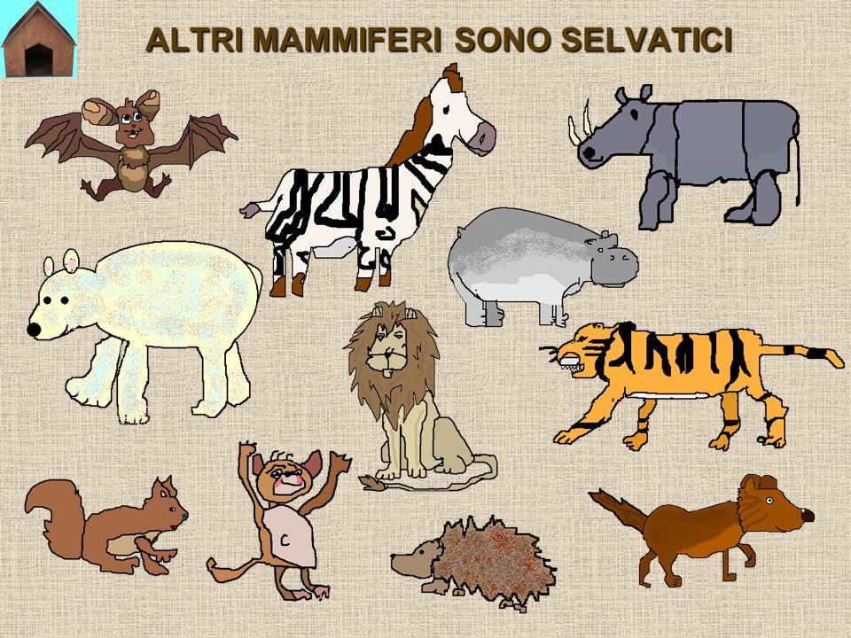 QUALE ANIMALE FARESTI ENTRARE NELLINSIEME DEI RETTILI?