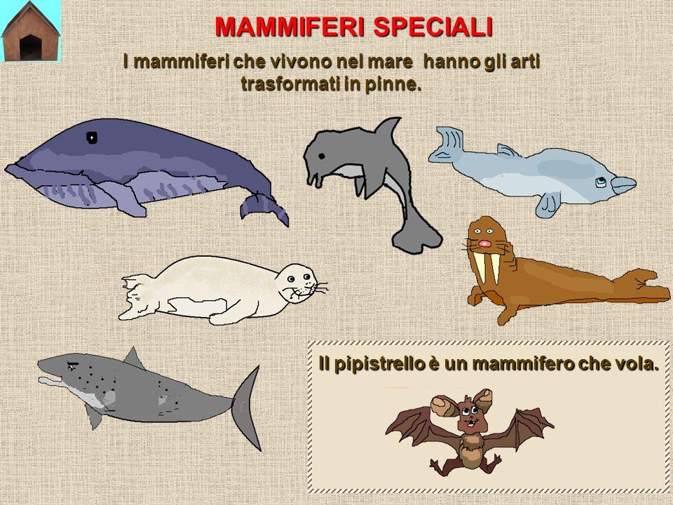 MAMMIFERI SPECIALI I mammiferi che vivono nel mare hanno gli arti trasformati in pinne.