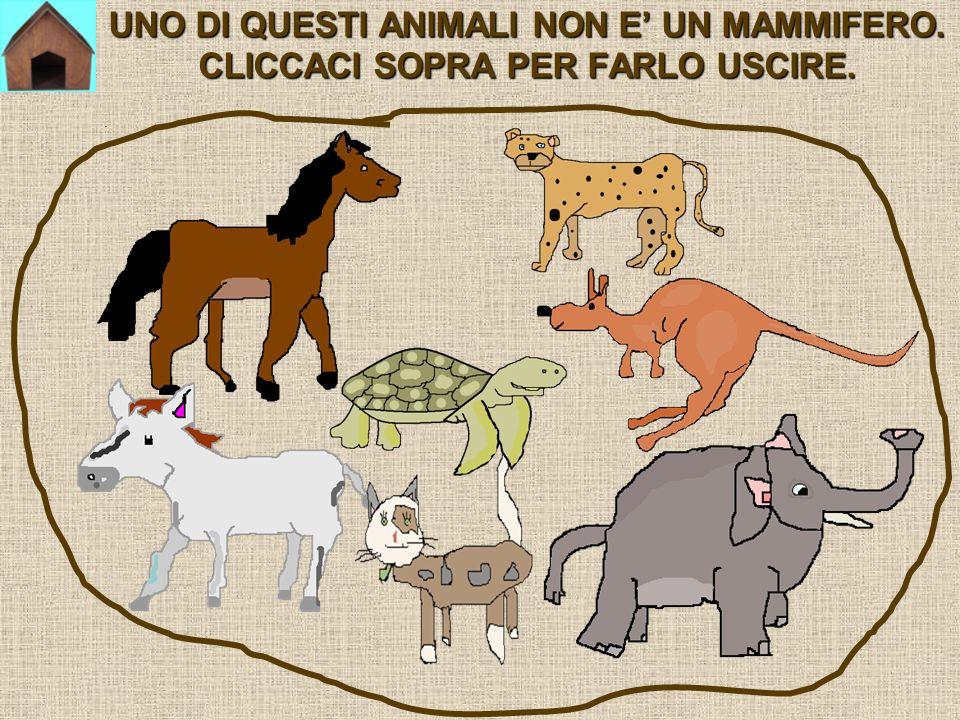 UNO DI QUESTI ANIMALI NON E UN MAMMIFERO. CLICCACI SOPRA PER FARLO USCIRE.