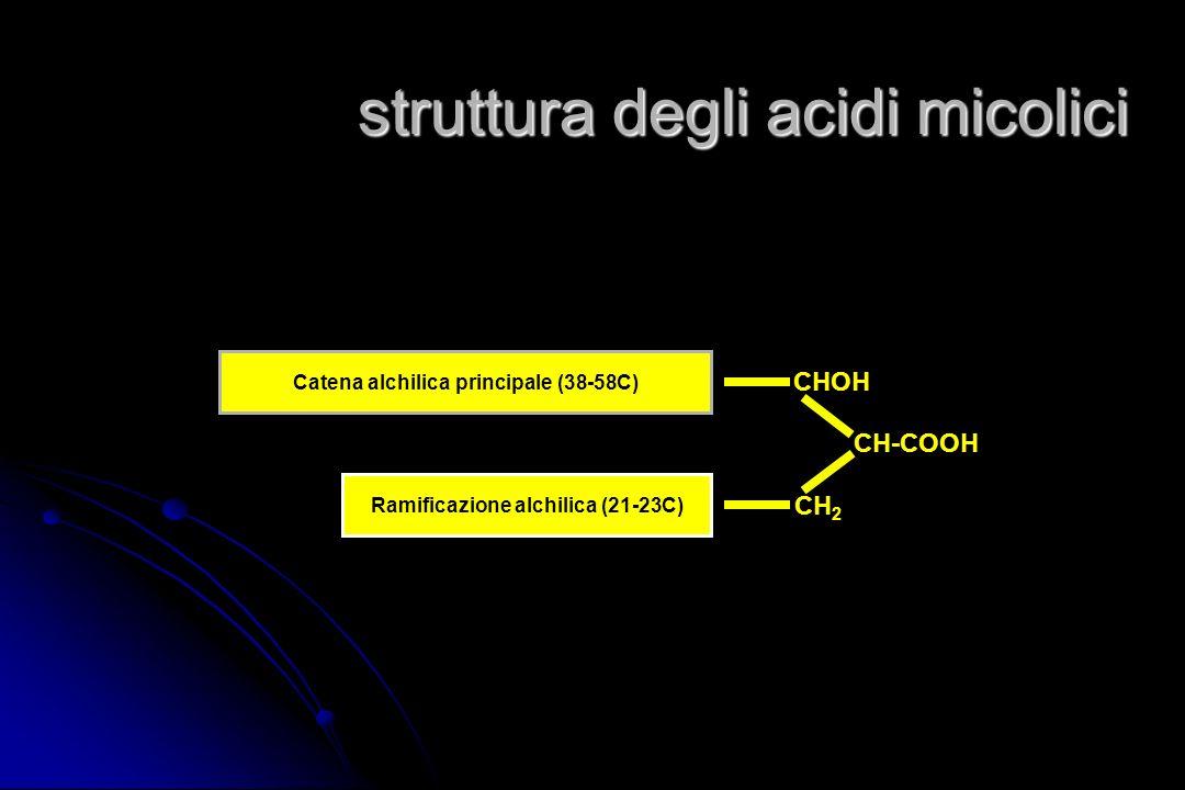 la parete dei micobatteri peptidoglicano arabino-galattano acidi micolici altri lipidi complessi
