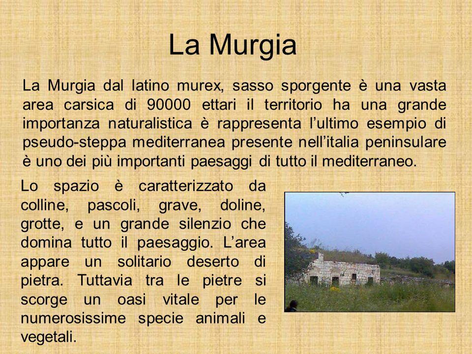 La Murgia La Murgia dal latino murex, sasso sporgente è una vasta area carsica di 90000 ettari il territorio ha una grande importanza naturalistica è
