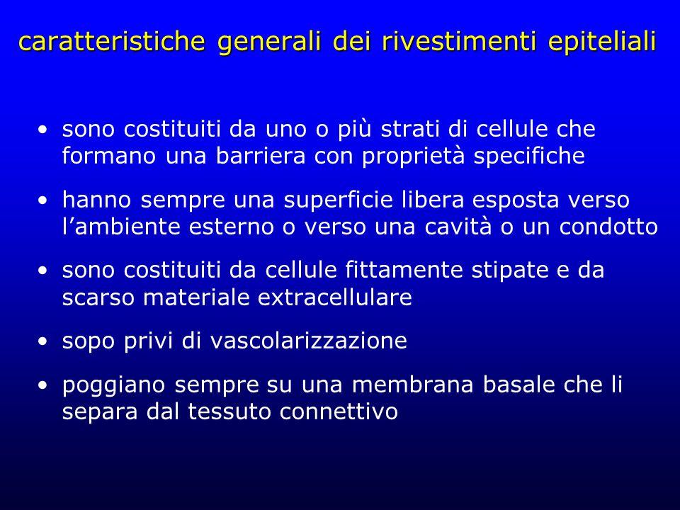 caratteristiche generali dei rivestimenti epiteliali sono costituiti da uno o più strati di cellule che formano una barriera con proprietà specifiche