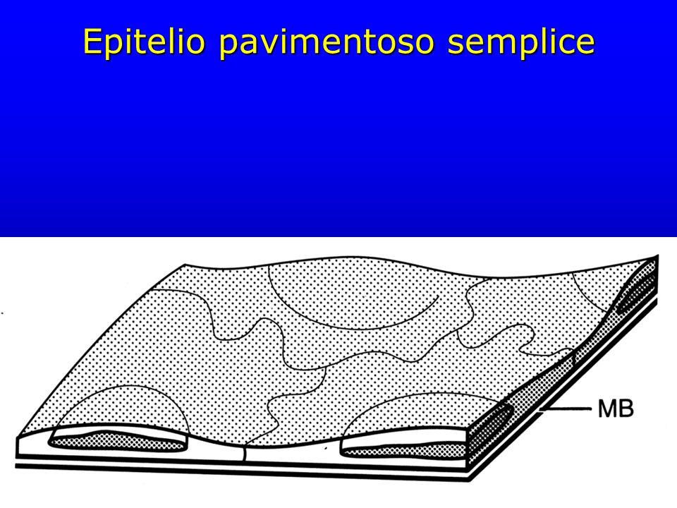 Epitelio pavimentoso semplice