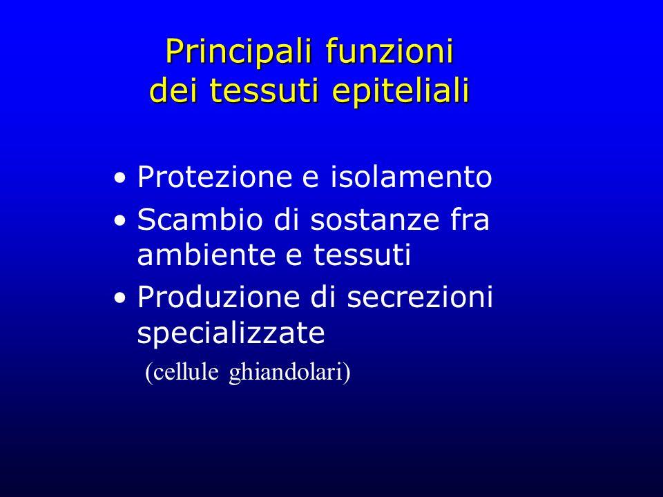 Principali funzioni dei tessuti epiteliali Protezione e isolamento Scambio di sostanze fra ambiente e tessuti Produzione di secrezioni specializzate (
