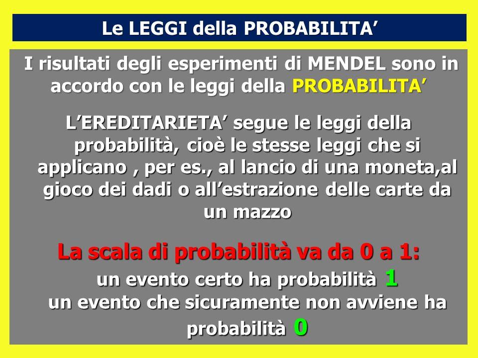 I risultati degli esperimenti di MENDEL sono in accordo con le leggi della PROBABILITA LEREDITARIETA segue le leggi della probabilità, cioè le stesse