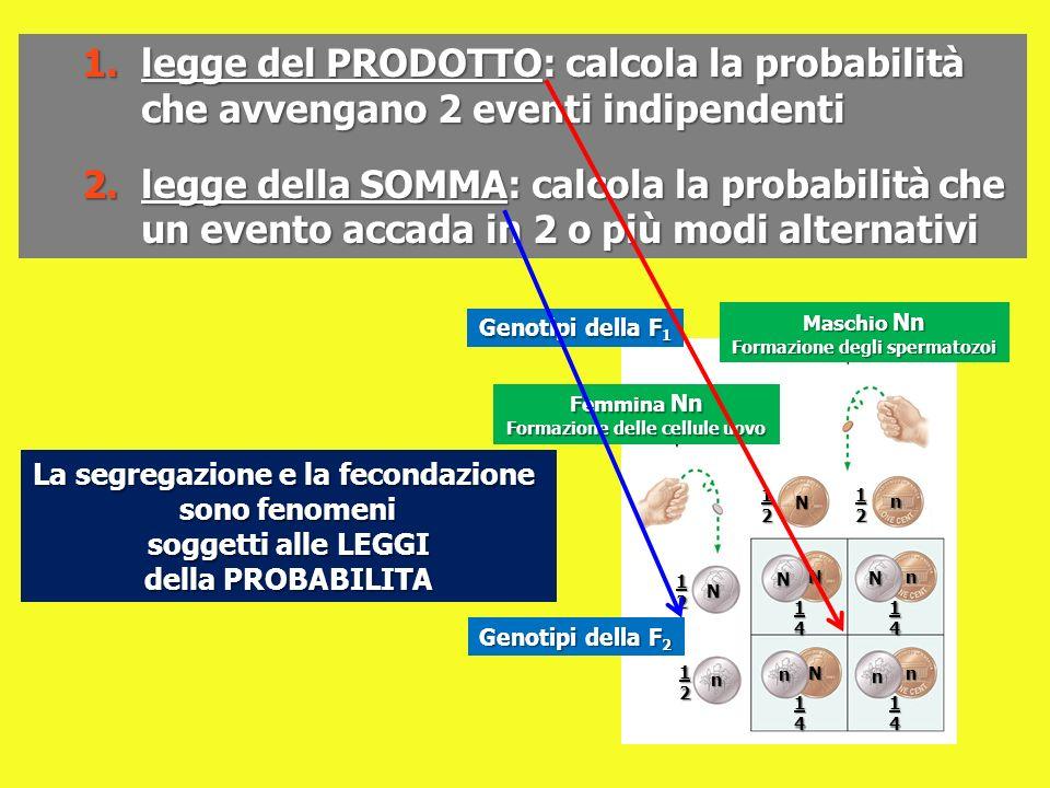 1.legge del PRODOTTO: calcola la probabilità che avvengano 2 eventi indipendenti 2.legge della SOMMA: calcola la probabilità che un evento accada in 2