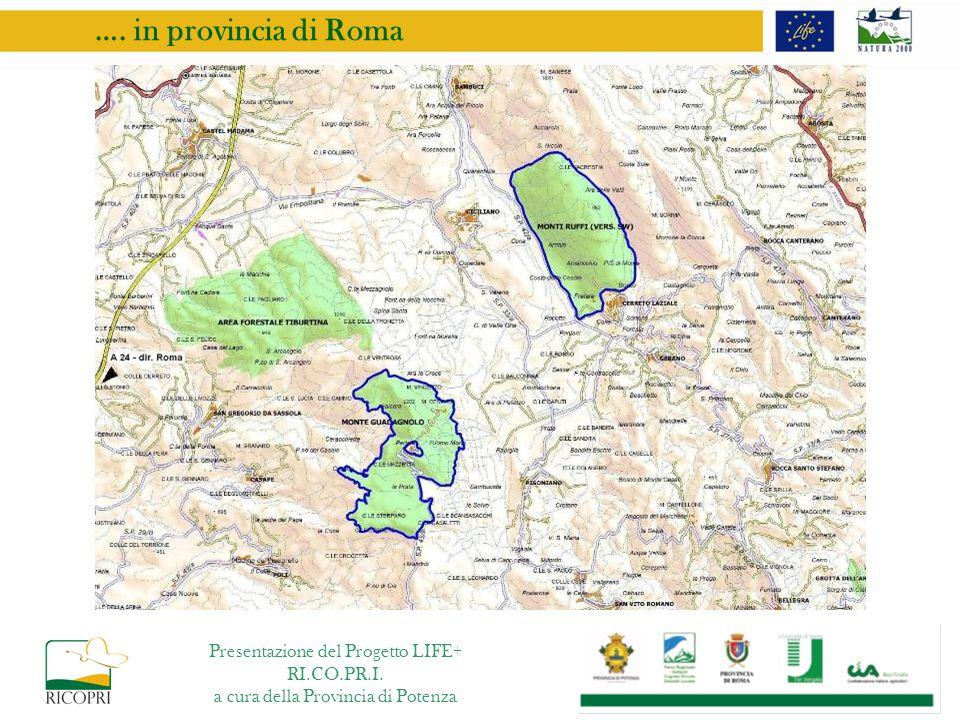 …. in provincia di Roma Presentazione del Progetto LIFE+ RI.CO.PR.I. a cura della Provincia di Potenza