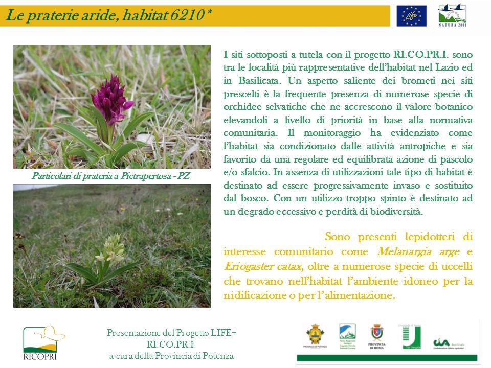 Particolari di prateria a Pietrapertosa - PZ I siti sottoposti a tutela con il progetto RI.CO.PR.I. sono tra le località più rappresentative dellhabit