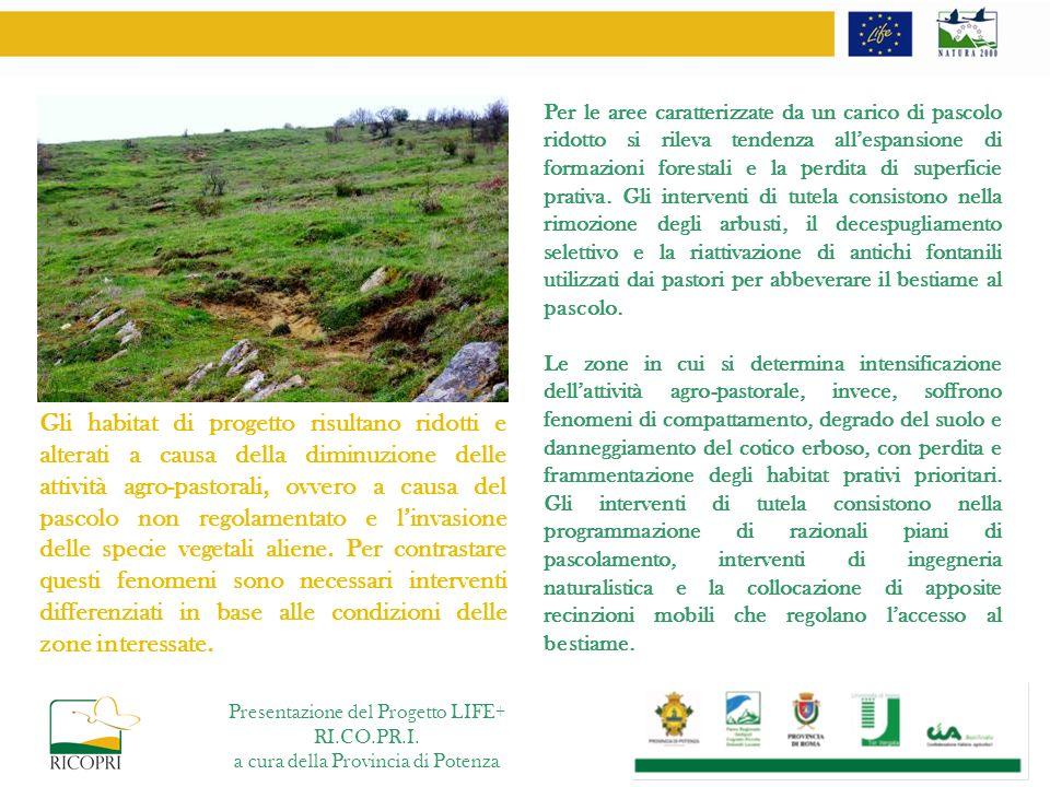 Per le aree caratterizzate da un carico di pascolo ridotto si rileva tendenza allespansione di formazioni forestali e la perdita di superficie prativa