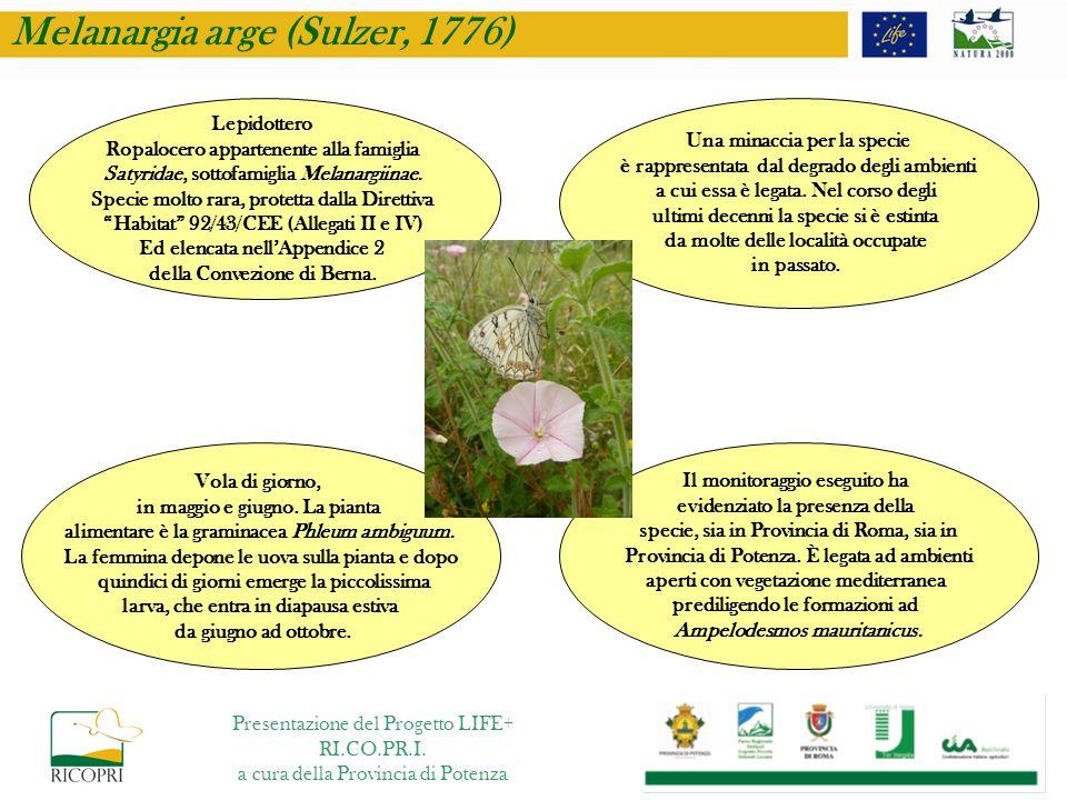 Il monitoraggio eseguito ha evidenziato la presenza della specie, sia in Provincia di Roma, sia in Provincia di Potenza. È legata ad ambienti aperti c