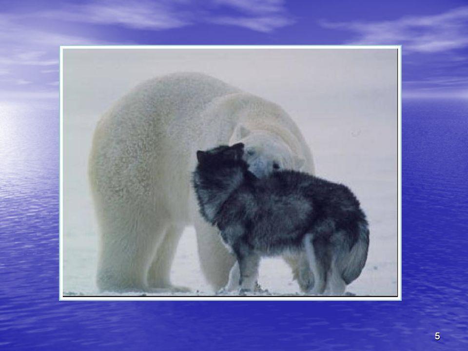 6 É difficile credere che questorso polare avesse soltanto bisogno di abbracciare qualcuno!