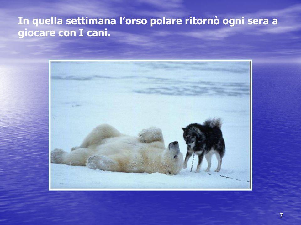 7 In quella settimana lorso polare ritornò ogni sera a giocare con I cani.