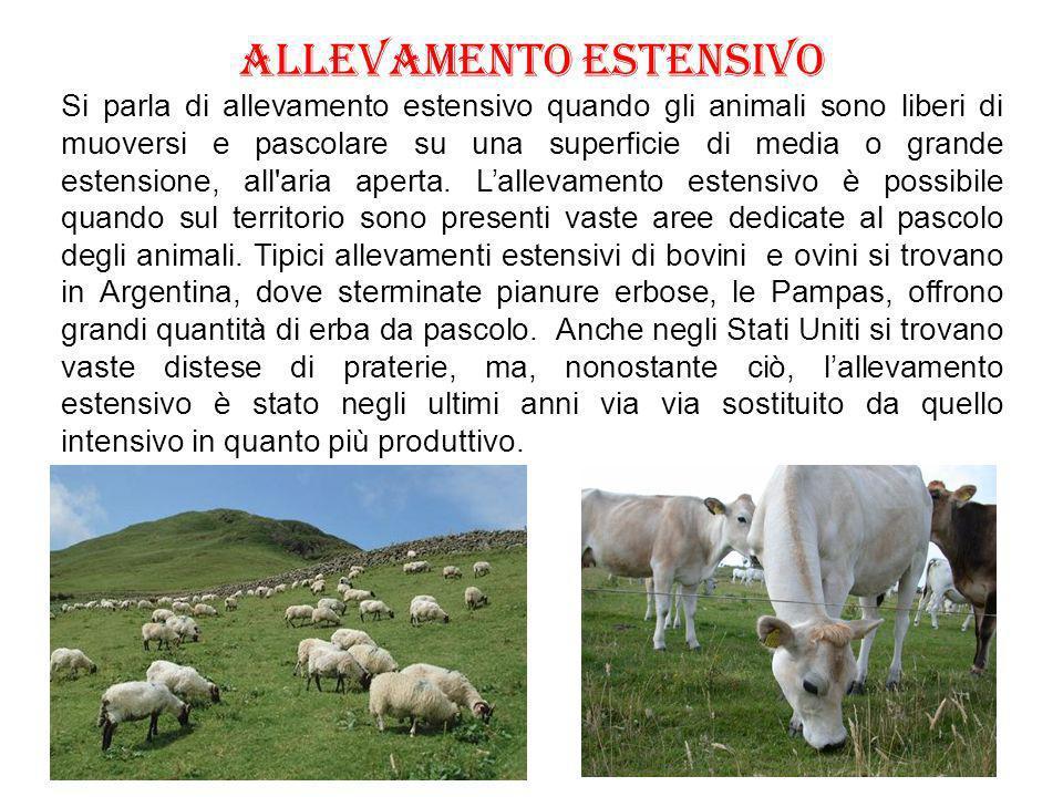Fame nel mondo Un aspetto drammatico dellallevamento intensivo, spesso taciuto dai media, è lenorme consumo di cereali per nutrire i bovini.