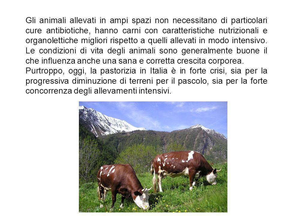 Allevamento estensivo Si parla di allevamento estensivo quando gli animali sono liberi di muoversi e pascolare su una superficie di media o grande estensione, all aria aperta.