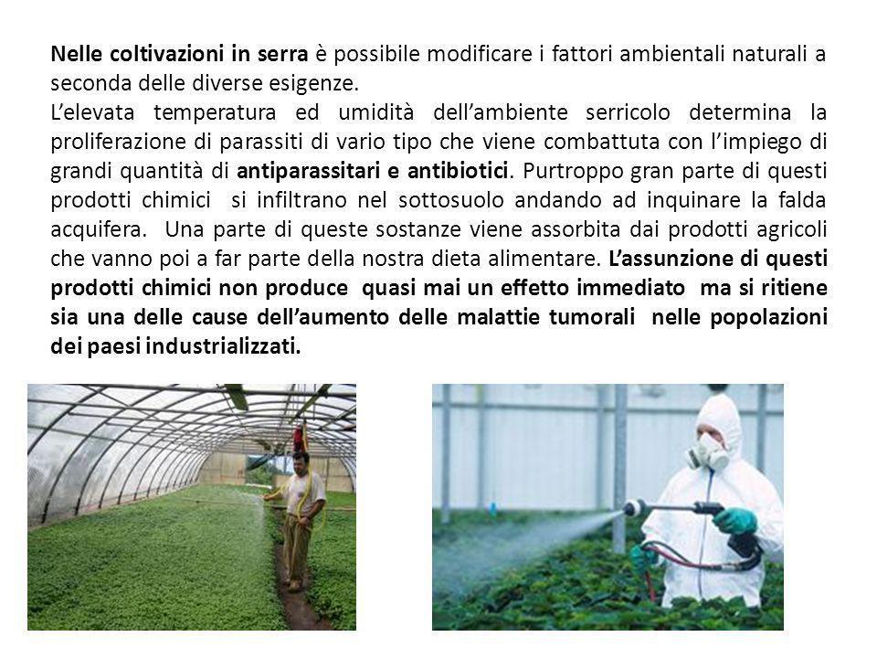 Coltivazione dei prodotti agro-alimentari Le coltivazioni si dividono in: - Coltivazioni in campo aperto -Coltivazioni protette (in serre) Nelle coltivazioni in campo aperto i fattori climatici (temperatura, umidità, illuminazione, ecc.) dipendono dal succedersi naturale delle stagioni.
